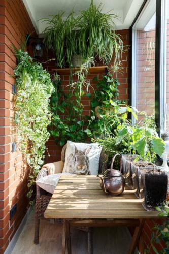 Много зелени и плетеная мебель