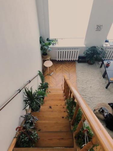 Лестница с растениями